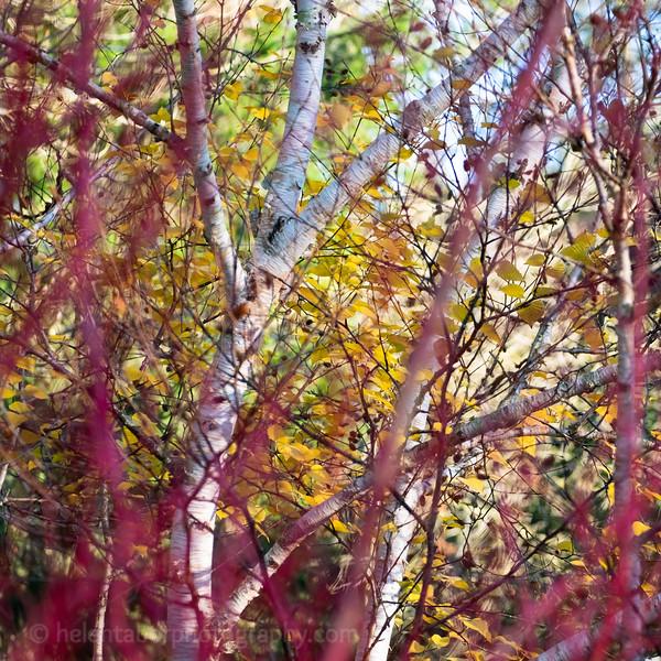 Himalayan Garden Oct 18-79.jpg