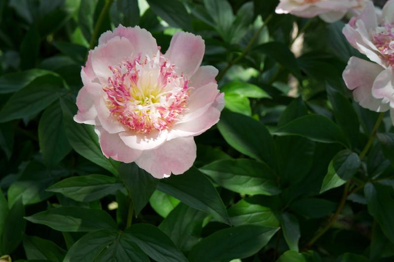 2013-06-15_Botanical~010.jpeg