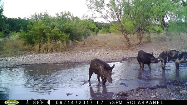 Most Recent Game Camera