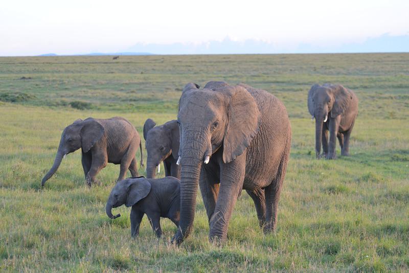 East Africa Safari 177.jpg