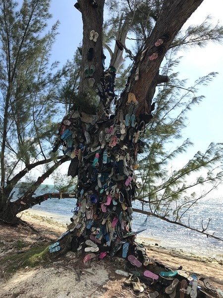 a tree on a beach with shoes