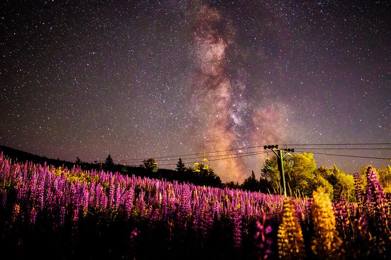 Milky Way Lupine at Saddleback Mountain
