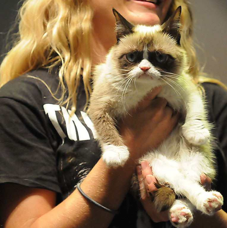 . Internet sensation Grumpy Cat doesn\'t look happy to be on stage at the 2013 Internet Cat Video Festival presented by Walker Art Center at the Minnesota State Fair Grandstand, Wednesday, August 28, 2013 in Falcon Heights. (Pioneer Press: John Autey)