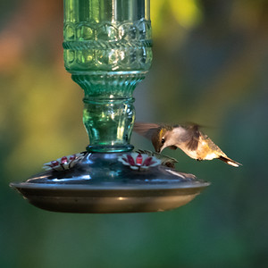 Hummingbirds at the Cottage