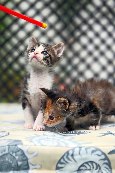 kittens_012-1.jpg