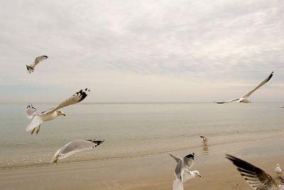 Birds, just birds