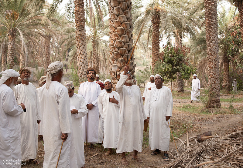 Palm Tree Auction 4- Mudhaibi.jpg
