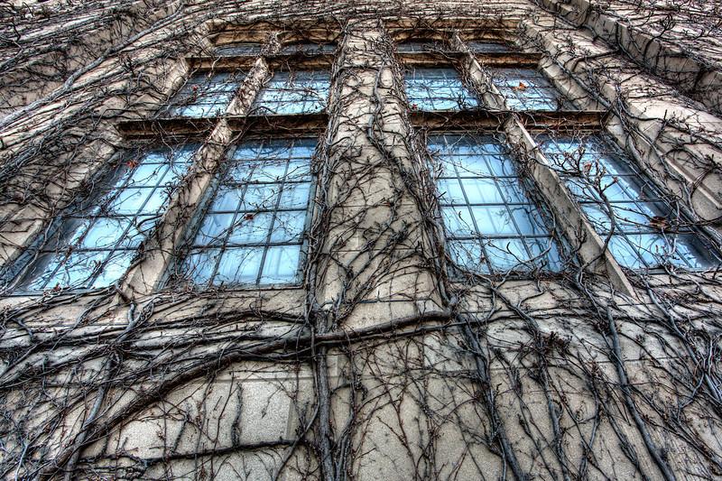 Oriental Institute Windows