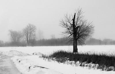 03-13-2019-fog