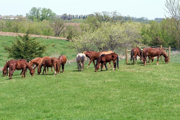 Hallelujah Stallions - Wells Creek  Goodhue Minnesota