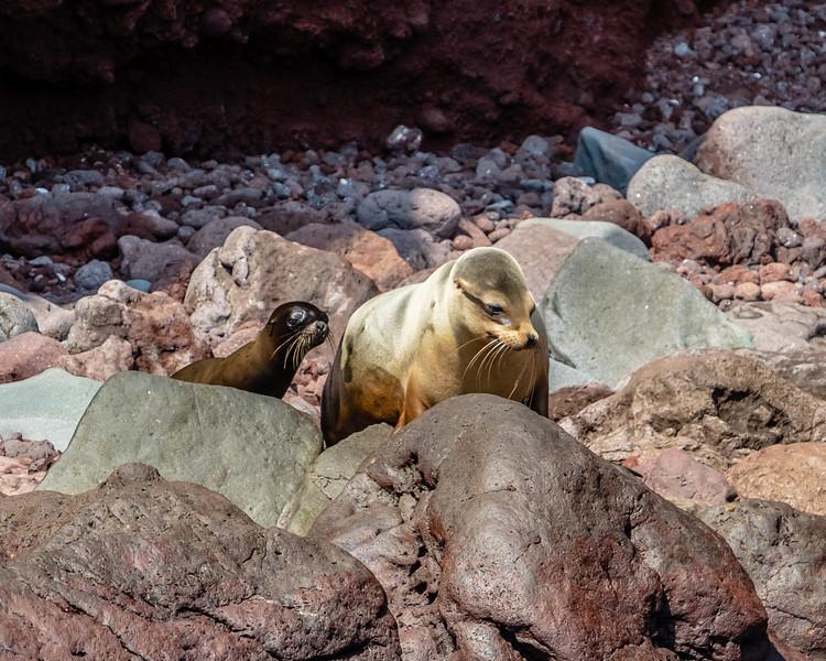 Galapagos-3204.jpg