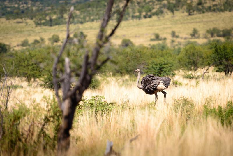 Pilanesberg-20130217-0026
