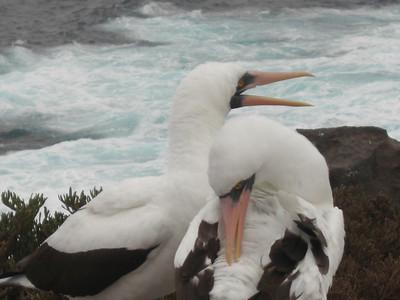Ecuador - Galapagos - Day 3 - Espanola - Trip 2