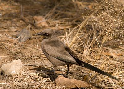 Birds Tanzania 2007