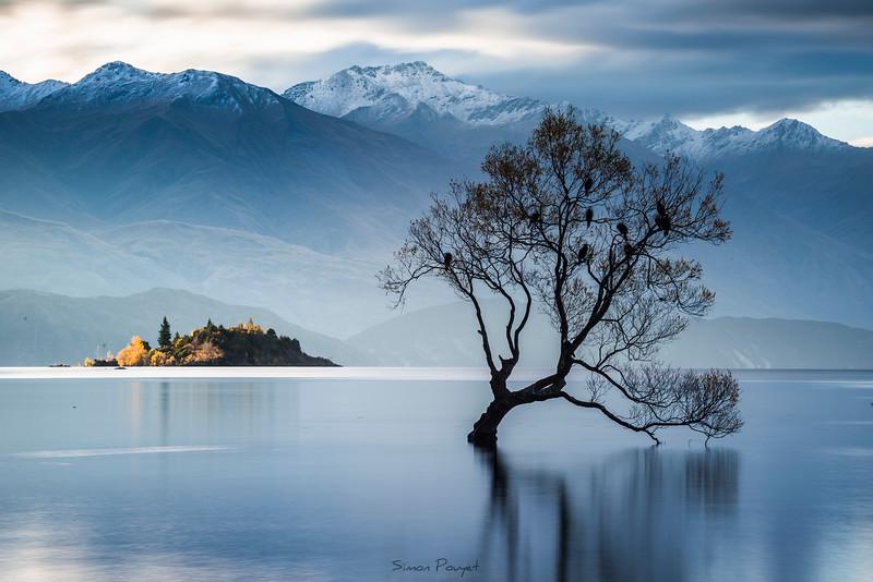 Wanaka tree II.jpg