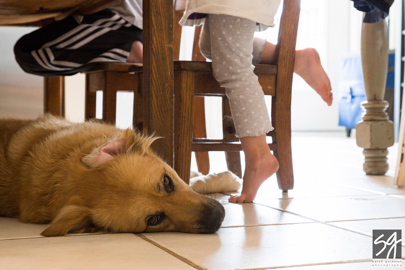 family-photographer-Charleston (12).jpg