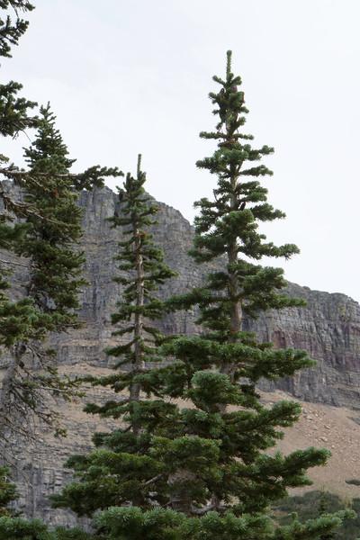 01_Glacier National Park_Montana-65.jpg