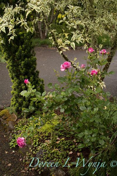 Rosa 06-01781 two_7024.jpg