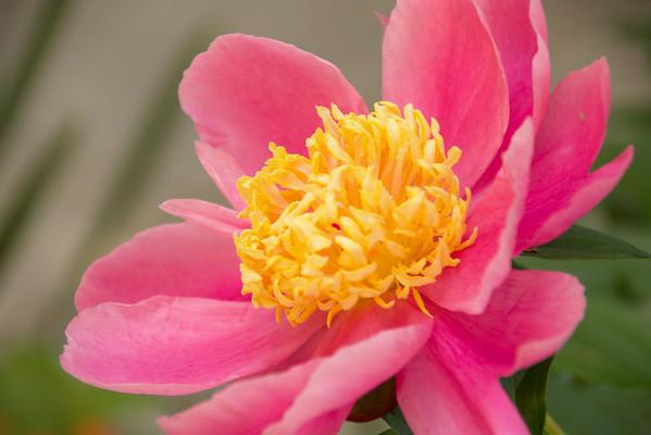 Delaware Flowers