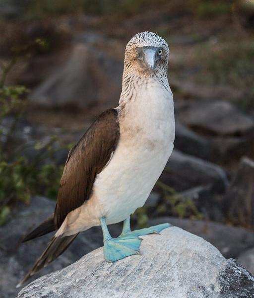 Galapagos_MG_4620.jpg