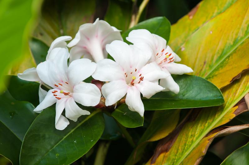 Hawaii Garden 18
