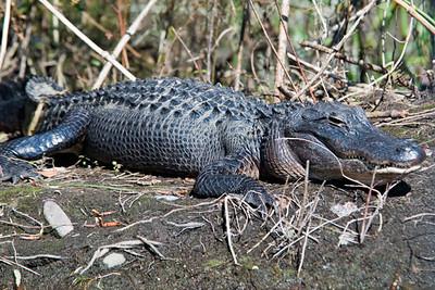 Feb. 21, 2010 - Wakulla Springs State Park, Florida