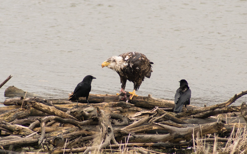 Lunch at the pond