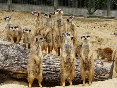 Travel - Zoos around the World