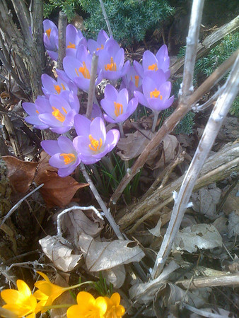 Me heart's a flitter flutter/springtime