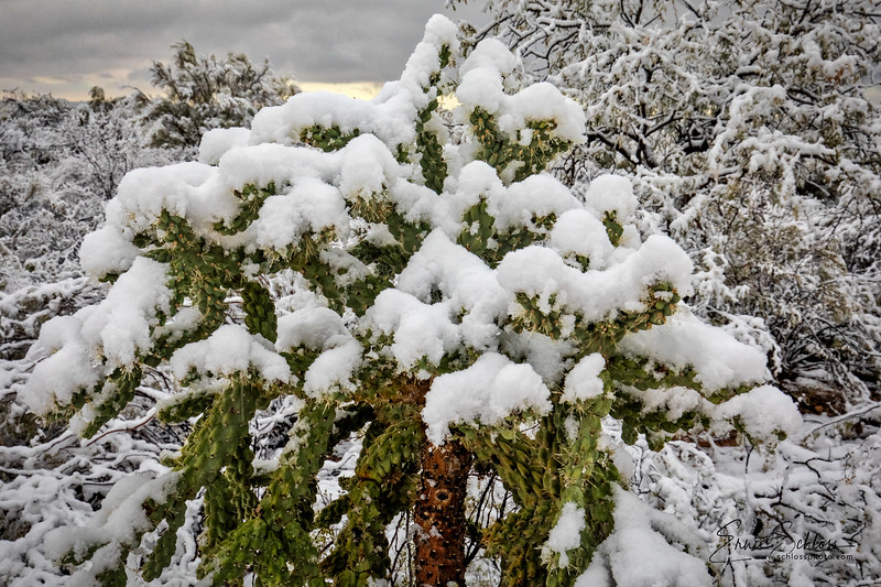 Saguaro East Snow 1-2-2019a 1-2-2019j-.jpg