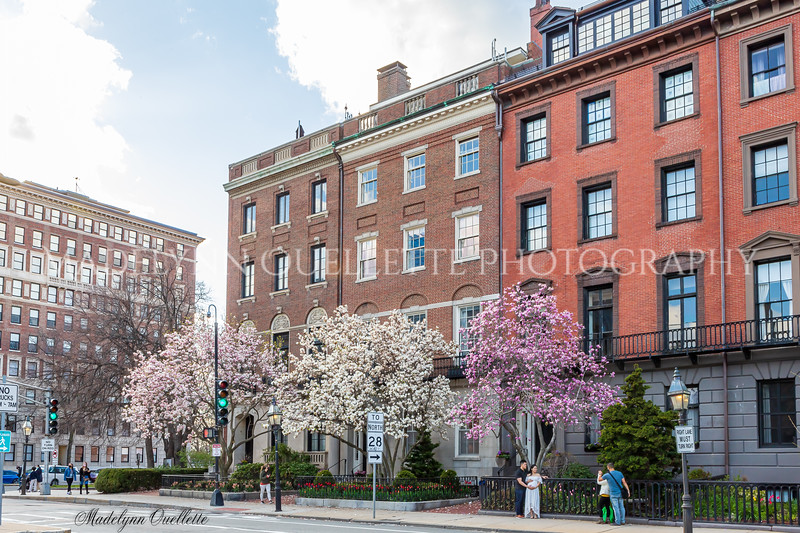 Beacon Street Splendor