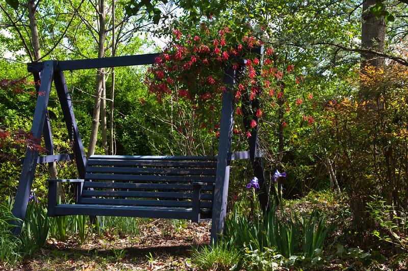 Purple swing in the garden room with native honeysuckle and native Iris