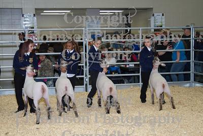 2013 Klein ISD Lamb Show Class 3