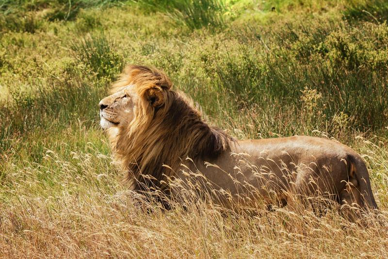 Tanzania-safari-18.jpg