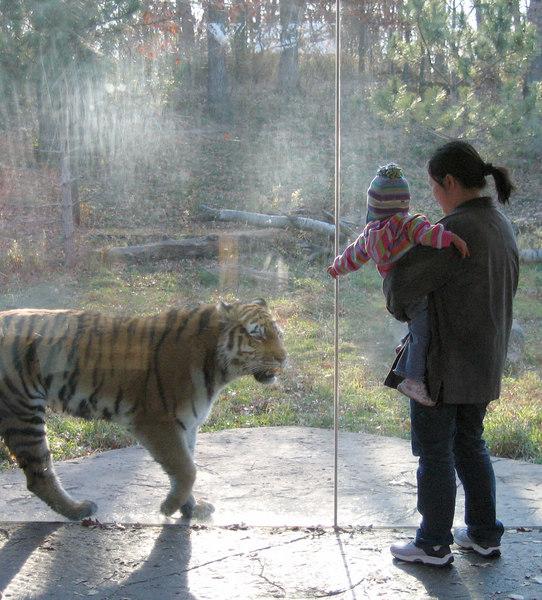nov 04, 06 Lindsay and the tiger 1.jpg