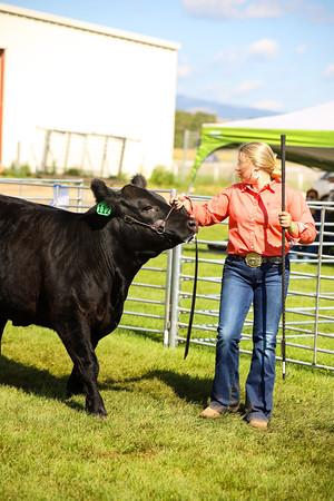 Beef Breeding