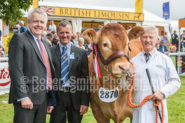 Limousin Cattle Judging @Royal Welsh Show 2015
