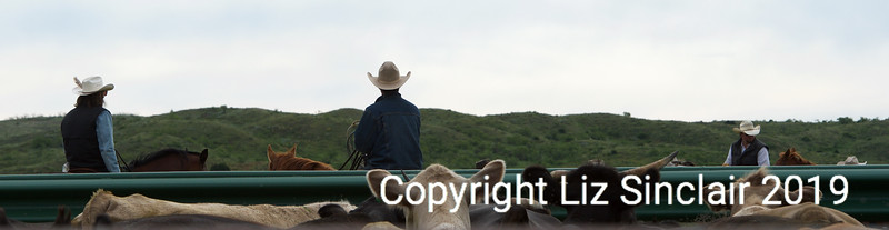 Spring Branding LX Ranch Liz's