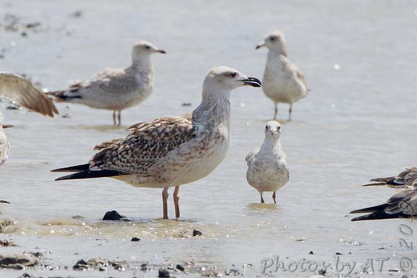 Birding 2019 August