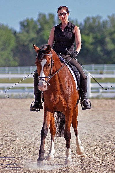 Horses July 2011 057a.jpg