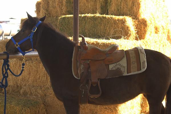 Jackson Horse Riding Lesson