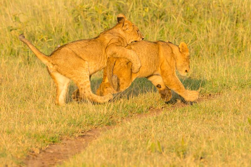 20160215__KET7589_Serengeti_Day_7.jpg