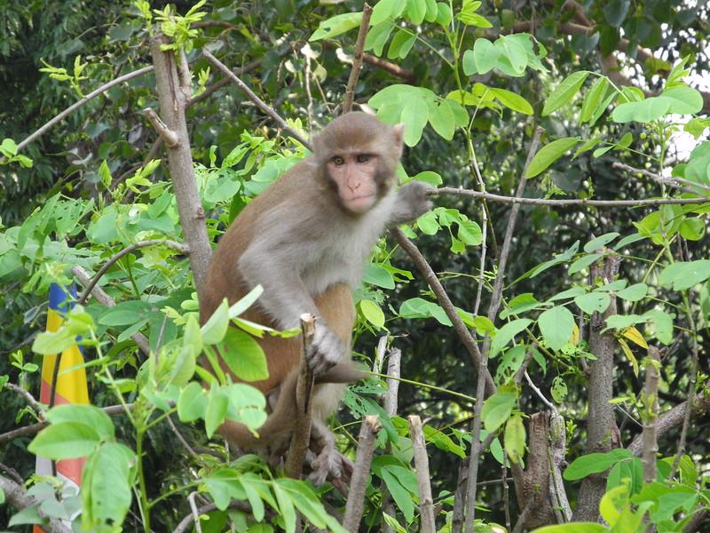 india&nepal2011 036.jpg