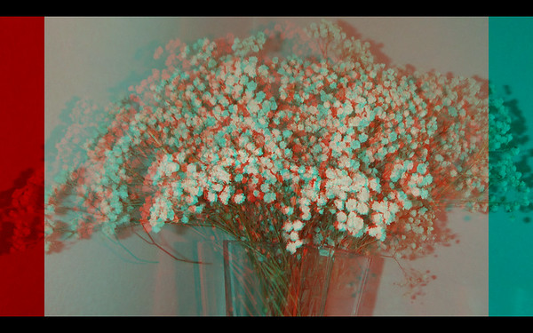Fugi Stereo Anaglyph Photographs of Flowers for Ebook