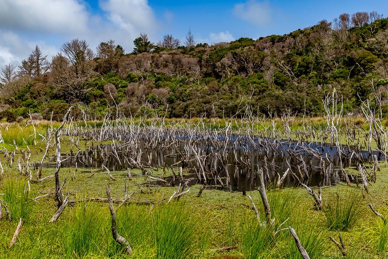 Verdorrte Bäume im Sumpf bei den Kai-Iwi Lakes