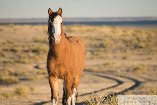 Great Escape Mustang Sanctuary (GEMS) 2012-2015