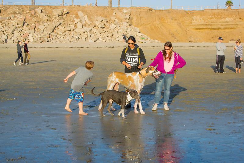 dogs_beach-34.jpg