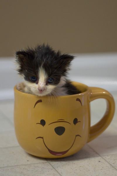 Kittens-0296.jpg