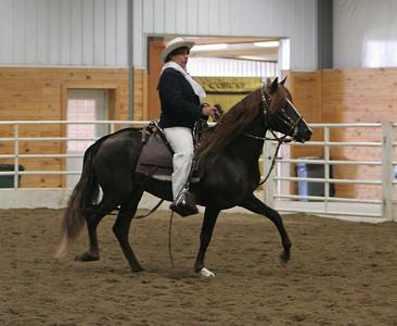 Class 15, Stallions 4-6, Amateur Performance