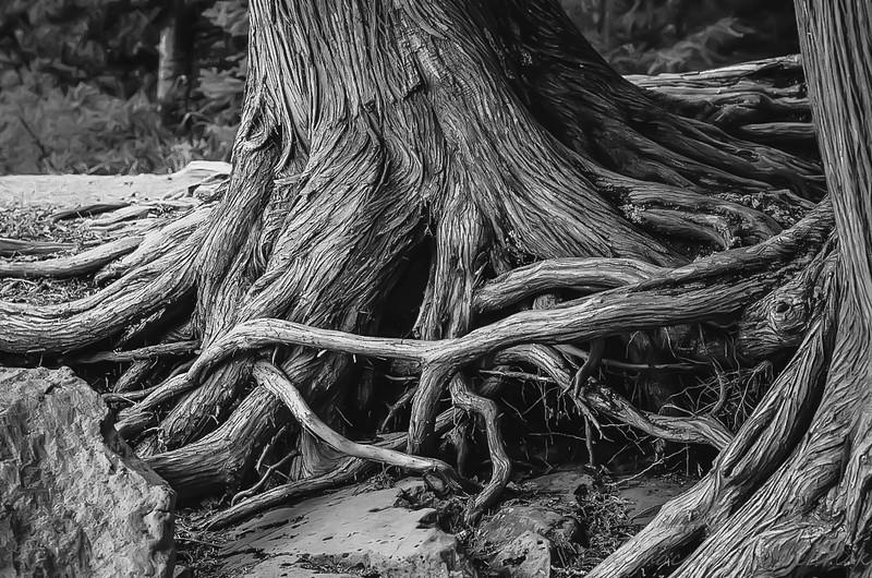 tree x (1 of 1).jpg